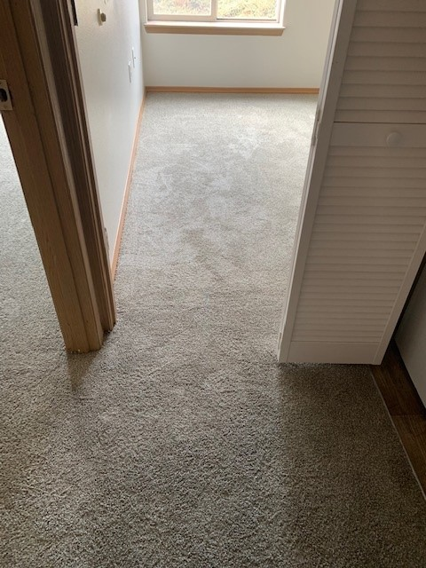 Rental Property Carpet